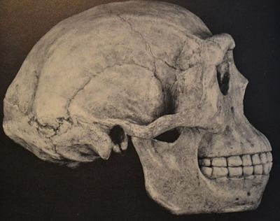 Peking Man skull